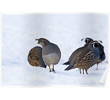 Quail in Snow Poster