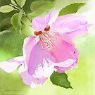 Apple Blossom by Joan A Hamilton