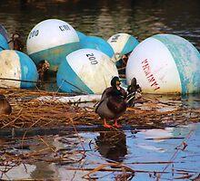 The Buoys are Mine! by Gilda Axelrod