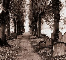 Nature - Spooky Path by ncp-photography