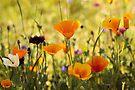 Summer Garden - JUSTART ©  by JUSTART
