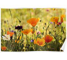 Summer Garden - JUSTART ©  Poster