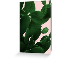 Cactus On Pink  Greeting Card
