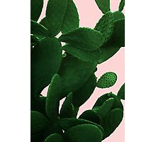 Cactus On Pink  Photographic Print