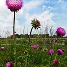 Thistles At Sandusky Bay Trail by SRowe Art