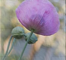 Purple Poppy by Elaine Teague