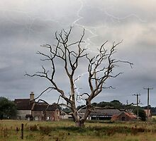 The lightening tree by missmoneypenny
