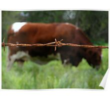 """RUSTY COW"" Best Viewed Large Poster"