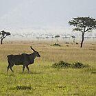 Eland in Masai Mara by António Jorge Nunes