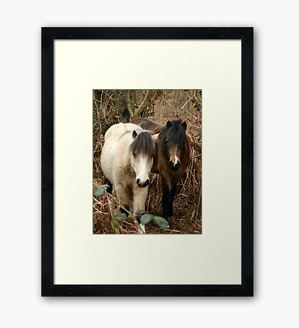 National Trust Ponies Framed Print