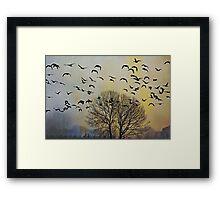 Bird Watching - JUSTART © Framed Print