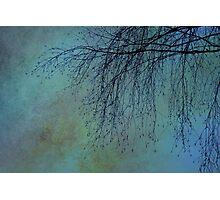 Hanging Tree - JUSTART ©  Photographic Print