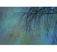 Hanging Tree - JUSTART ©  Photographic Print