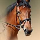 horse by Declan Carr