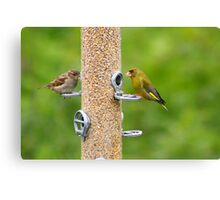 Female Sparrow and Male Greenfinch Canvas Print