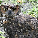 Whoo you lookin at? by alamarmie