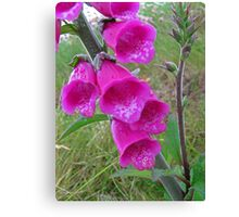 Foxglove (Digitalis) Canvas Print