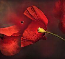 Poppies by Ellen van Deelen