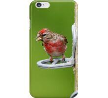 Lesser Redpoll iPhone Case/Skin