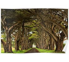 Point Reyes Cypress Tunnel Poster
