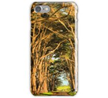 Cypress Lined Road iPhone Case/Skin