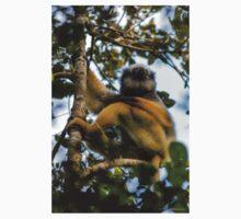 A diademed sifaka-Lemur T-Shirt