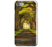 Cypress Tunnel Afternoon Glow iPhone Case/Skin