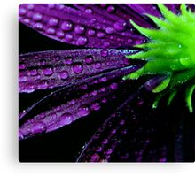 Purplicious Canvas Print