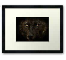Midnights Gaze - Black Wolf Wild Animal Wildlife Framed Print