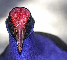 Purple Swamphen portrait, Port Douglas, Queensland, Australia by MrBennettKent