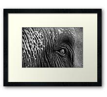 Close-up shot of Asian elephant eye Framed Print