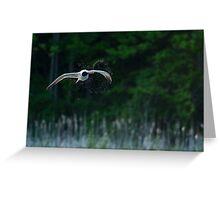 Caspian Terns Hunt Greeting Card