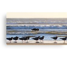 why walk when we can all Fly Canvas Print