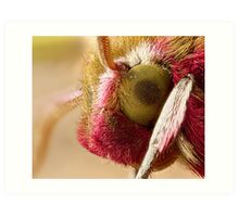 Elephant Hawk moth eye Extreme macro Art Print