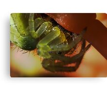 Green orb Weaver spider extreme macro Canvas Print