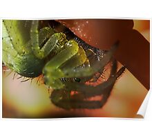 Green orb Weaver spider extreme macro Poster