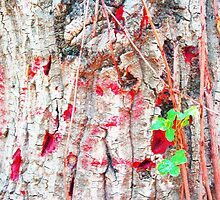 Nature's Graffiti A Study in Red by subliminalart