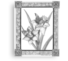 Gloucester Daffodils Canvas Print