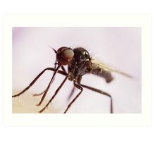 Insect Extreme Macro Fly With Pollen Art Print