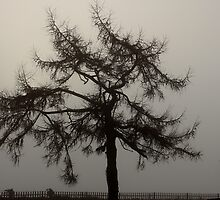 Nature - Foggy outlook by ncp-photography