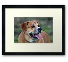 Looking for You Dog Framed Print