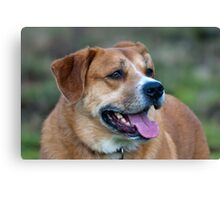 Looking for You Dog Canvas Print