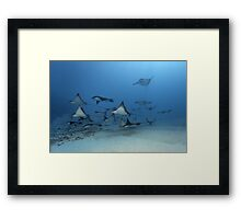 Wing Pack Framed Print