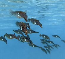 Squid Squadron by Norbert Probst