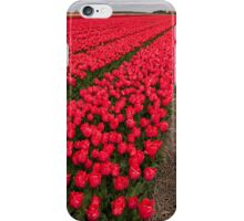 Tulip fields in springtime iPhone Case/Skin