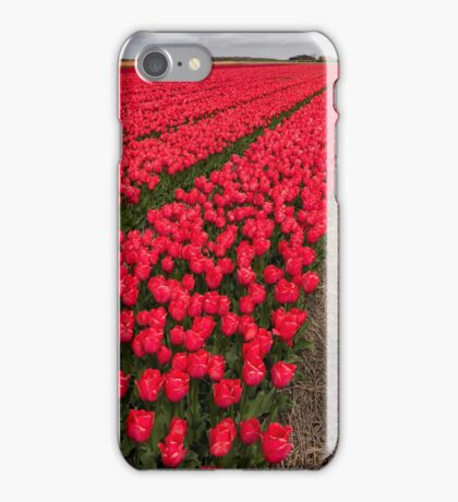 Tulip fields in springtime iPhone Case/Skin