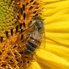 Bee On Sunflower by Martha Medford
