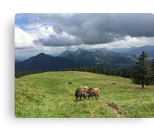 Gossiping Cows Canvas Print