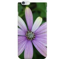 Purple Daisy Flower With A Hint Of Yellow iPhone Case/Skin