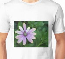 Purple Daisy Flower With A Hint Of Yellow Unisex T-Shirt